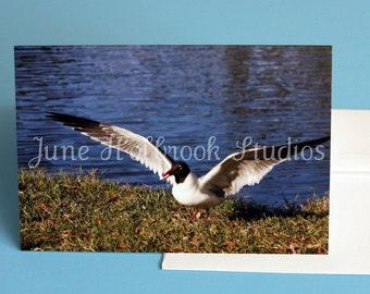 4 x 6 Blank Note Card with Envelope,  Sea Gull Landing near lake in Arlington Park, Sarasota, FL No. Wings 0001