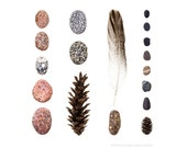 Beachcombing series No.44 - 8x8 photograph - Coral Pink Granite Beach Stones and Feather