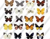 Digital Collage Sheet  Butterflies (Sheet no. O187) Png-Instant Download
