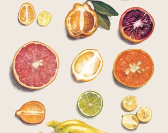 Winter Citrus Cards- 10 Blank Greeting Cards