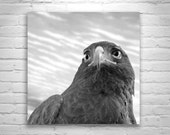 Hawk Print, Bird Photography, Hawk Bird, Bird Art, Hawk Art, Black and White, Square Art, Square Print, Wall Art Birds, Hawk Photography