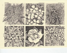 Flowering Shrubs! This six-pack of blank, ivory cards features drawings of lilacs, dogwood, forsythia, rhododendron, magnolia and crabapple