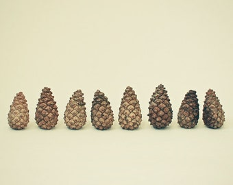 CLEARANCE SALE! Nature Photography, Still Life, Pine Cone Art, Rustic, Shades of Brown, Woodland - Pine Cones