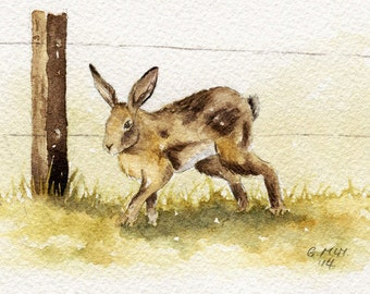 Watercolour sketch - Hare by a Fence