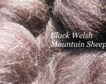 Black Welsh Mountain Sheep Combed TOP