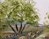 Original 5 X 7 TEXAS BLUEBONNETS & MESQUITES Landscape Oil Painting