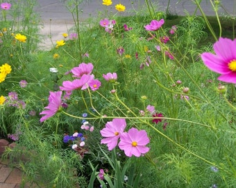 Flower Seeds, Mixed Flower Seeds, Organic Flower Seeds, Flower Garden Seeds