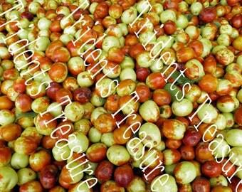 Apples Wall Art - Warholesque Wall Art - Digital Food Art - Photography - Kitchen Art - Restaurant Kitsch