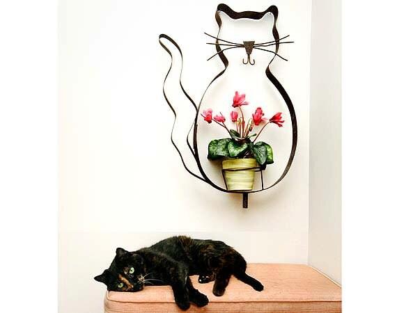 Cap Nap, Sleeping Cat, Black Cat, Cute Cat