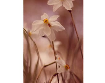 Flower Photography, 5x7 Print, Wildflower Print, Nature Photography, Narcissus Print, Dreamy Photography, Spring Decor, Floral Photography