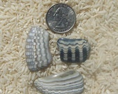 3 Fossilized Clamshells