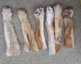 Large Coyote Legskin with Paws and Claws