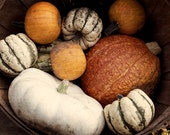 Autumn decor, Halloween pumpkin, still life photo, fall gourds, fine art photogrpahy print, rustic wall art, burnt orange, white, green
