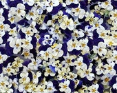 Giftwrap, Wrapping Paper, Gift Wrap, Violas, Pansy, Craft Supply, Bridal Shower, Birthday, Floral, Wedding, Paper, Gift Wrapping, Decoupage