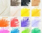 "Ostrich Feather Plumes- 12-14"" (10pcs)"