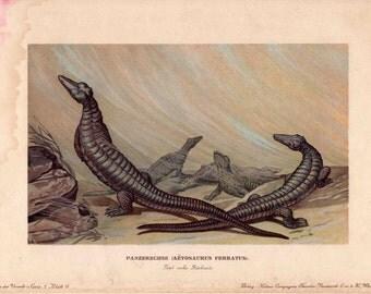 1902 dinosaur rare antique print -aetosaurus ferratus