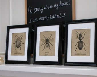 Free US Shipping...Set of Three Antique-Style Burlap Insect Illustrations. Prints only.