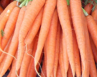 Carrot, 2x4 Giant Carrot Seeds | Grow Your Own Giant Carrots