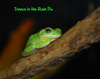 Relaxing Frog Photograph