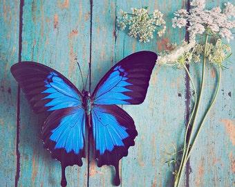 Flower & Butterfly ~ 8x10 print