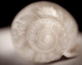 Seashell Art,  Natural History, Beach Art, Nature Photography,  Nautical Wall Decor, Ocean Decor, Ocean Art, Fine Art Photography