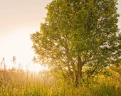 Sun bathed Nature Photograph, Summer Green Tree, Nature Photography