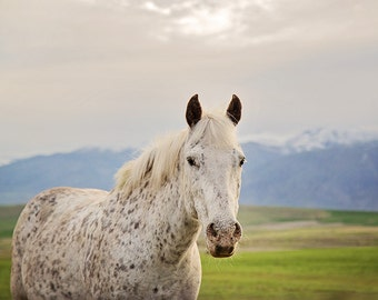 Freckled horse in Mountains, Soft Color Animal Photograph
