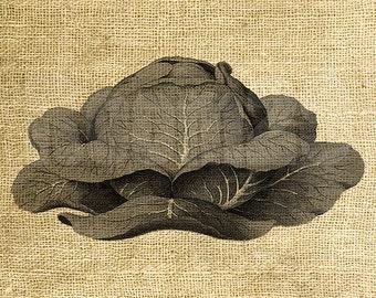 Digital Peper INSTANT DOWNLOAD - Cabbage Illustration - Download and Print - Image Transfer - Digital Sheet by Room29 - Sheet no. 1193