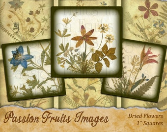 Pressed Flowers-- 1 inch squares Inchies Digital Collage Sheet-- Instant Download