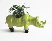 Stella the mini rhino. Chartreuse with little black boots. Planter planted with air plant.