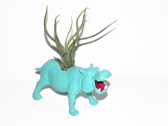Air plant in repurposed toy aqua hippo animal planter.