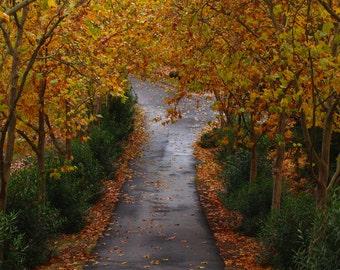 Fine Art Photograph Road Trees Autumn Vibrant