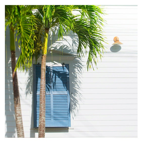 "Art, Photography by Cindy Taylor, Fine Art Photography, Coastal Home Decor, Wall Art, Palm Tree, Blue Shutter , ""Cottage Light and Shadows"""