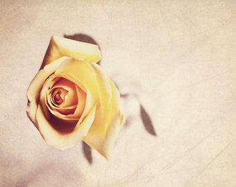 Shabby chic photography Nature photography yellow rose photography pastel vintage photography art rustic  Decor   Fine Art Photography Print