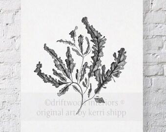 Seaweed in Charcoal Print 11x14
