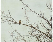 Bird print, bird in tree, soft green and taupe, still life photography,Northern flicker photo