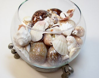 Assemblage Of Sea Shells In Glass Bowl On Silver Iron Metal Stand Hand Carved Cowrie Shell