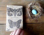 Coptic Stitch Blank Nature Journal/Book/Sketchbook/ with Butterflies-Upcycled-Recycled