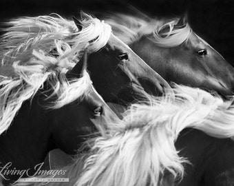 Big Mares Run - Fine Art Horse Photograph - Horse - Black and White