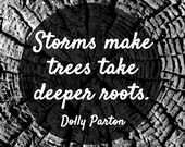 Storms Make Trees take deeper Roots - Dolly Parton Quote - Old Growth Fine Art Photography Print - Wall Art - Nature Print - Home Decor