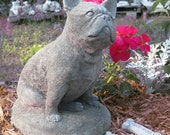 French Bulldog  Concrete garden Statue ( Shipping for west of the Mississippi river )