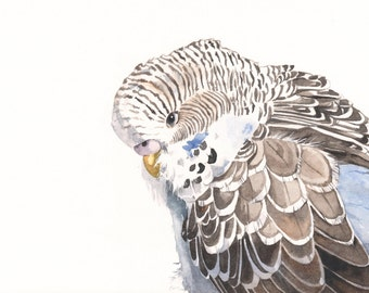 Budgerigar Parakeet Watercolor Painting - print of watercolor painting 5 by 7print- bird art- parrot art - wall art print - bird art print