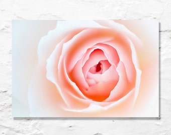flower photo rose photograph fine art photography wall decor nature nursery art floral garden pink orange white