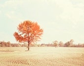 """Autumn Photography - landscape fall tree field country farm beige orange cream rust brown print - 8x10 Photograph, """"Autumn in the Country"""""""