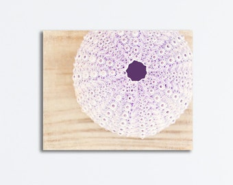 "Sea Urchin Canvas Wrap, beach photography pale purple light beige seashell canvas gallery wrap coastal wall art, ""Treasure from the Sea"""