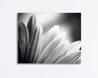 """Modern Black and White Canvas Photography, dark grey gray flower nature gallery wrap petals wrapped canvas botanical wall art print, """"Flare"""""""