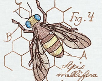 Bee diagram etsy honey bee diagram embroidered flour sack handdish towel ccuart Images