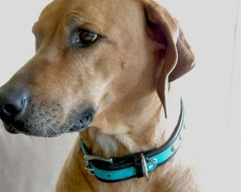 SALE - Leather Dog Collar w Turquoise Crackle Finish and Silver Metal Rivets for a Large Dog, Custom colors available