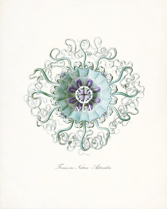 Coastal Decor Fantasy Sea Life Giclee Art Print, Jellyfish No. 2 aqua