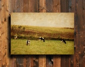 "Autumn Cows - 16x24"" Canvas print - Cows photography - Country photography  - Cow art - Cow decor - Country decor - Autumn decor"